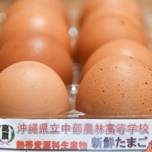 歓迎の卵♪