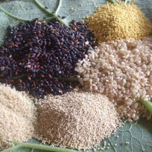 おいしく続けられる玄米の選び方