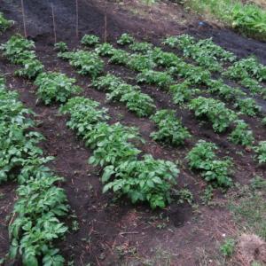 免疫力が低下する農薬まみれの野菜