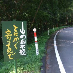 自然食研究所周辺の景観「山の楽校のひまわり畑」