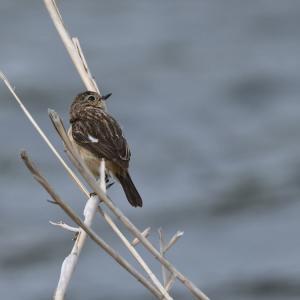 4月23日  K川の鳥さん達