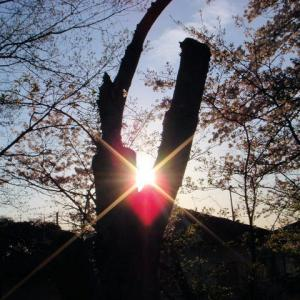 """""""人生はスピリチュアルである。あなたも今日から気功ができる。光明気功でハート形の光明"""""""