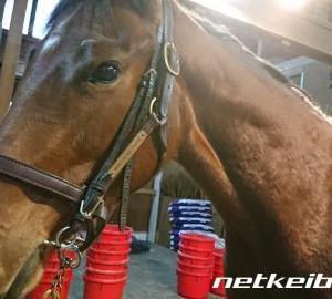 今週の競馬のGIレースフェブラリーSの勝ち馬を「偶然の一致の法則(宇宙の法則)」で推理