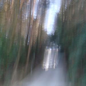 京都達磨堂円福寺での体験