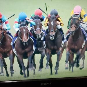 朝から242倍の馬連を的中✋【新潟競馬1R】