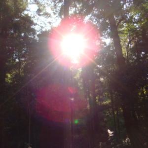 """""""悟りに向けた人生。 円形の光明は悟りをあらわします(写真)"""""""