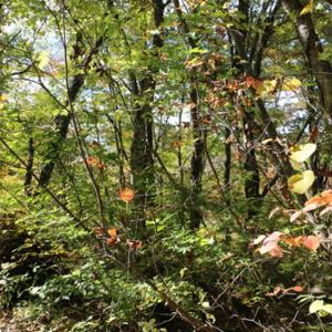 スカイバレー&裏磐梯の秋景色・11