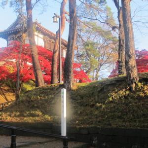 晩秋、千秋公園の紅葉・黄葉・落葉のルクス(lux)・・・その6