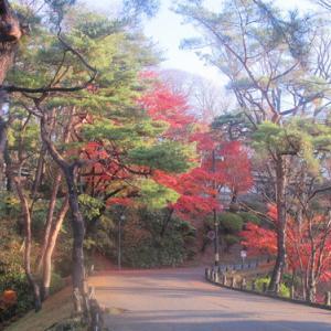 晩秋、千秋公園の紅葉・黄葉・落葉のルクス(lux)・・・その5