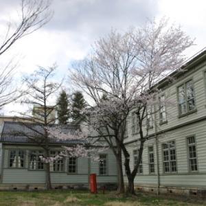 重文本館階段教室東側の桜が満開 2020.4.9