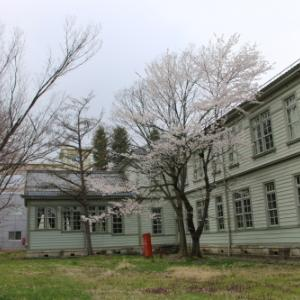 階段教室東側の桜 2020.4.1