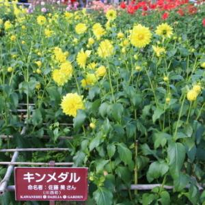 川西ダリヤ庭園