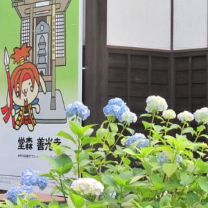 堂森・善光寺の紫陽花(10)