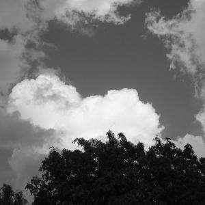 モノクロ写真 806