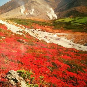 日本一早い紅葉🍁北海道の大雪山めぐり!