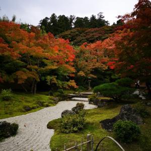 日本三景・松島の名園❕円通院☘️🍁