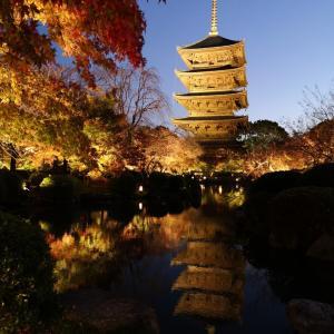 京都・世界遺産❕東寺のライトアップ✨🍁