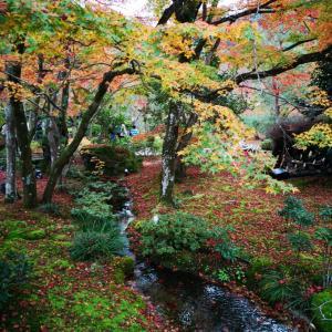 京都・嵐山の紅葉名所🍁宝厳院(ほうごんいん)