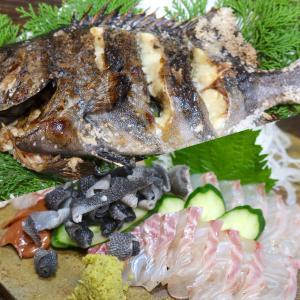 松山「居酒屋 まつだ」で石鯛フルコース&スマガツオの塩タタキを堪能!