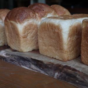 色んな酵母で生食パン
