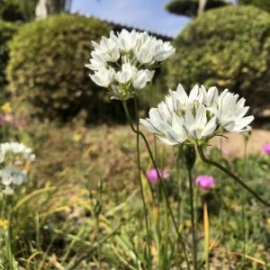 花を見る心