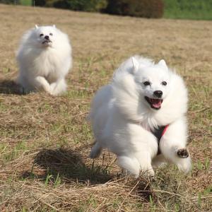 走る~走る~スピ達♪