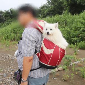 ビックリの朝散歩!
