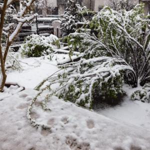 予報通りに雨から雪になりました
