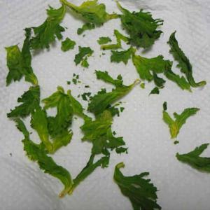 乾燥セロリの葉