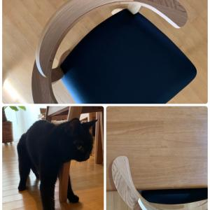 猫の介護日記 ~ダイニングチェアを新調!~