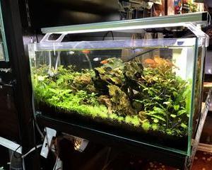 店内レイアウト水槽「水草」