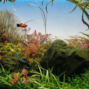 水草『ピグミーチェーンの花❀』