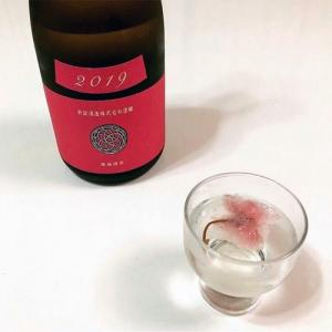 新政酒造「秋櫻(コスモス)」で花見酒