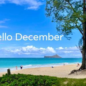 Hello December! ハワイは12月でも1年中泳げるってすごい!
