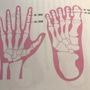足指が使えていれば腰痛、ひざ痛が治る?