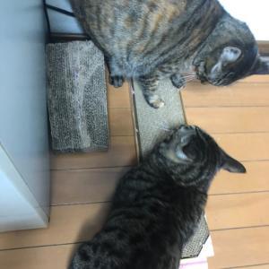 猫ちゃんが爪とぎをする理由