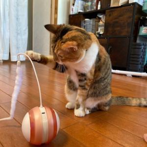 猫ちゃんとローリングタンブラー♪