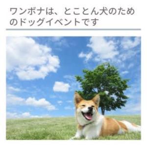 国際湘南村 ワンボナ2019 とことん犬のためのFes