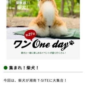 湘南T-site  27回ワンOne Day