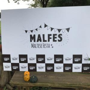 マルフェス2020 レポート
