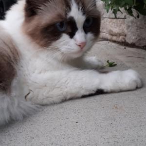 ハーブ好きな猫