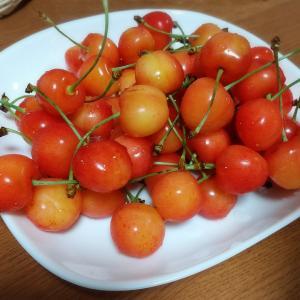 さくらんぼの季節ですね。チェリまほ♪