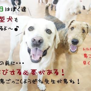 大型犬も加わって写真撮影( ✧Д✧)