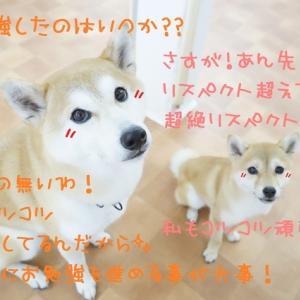 受験は大変なのだっ!!!(/ω\)