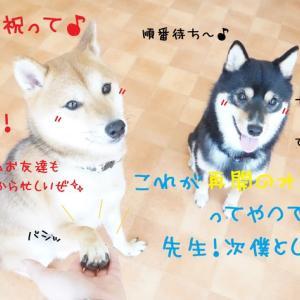 今日も元気にGOGO~((((oノ´3`)ノ