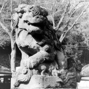 狛犬たちのモノローグ  File836  高尾氷川神社