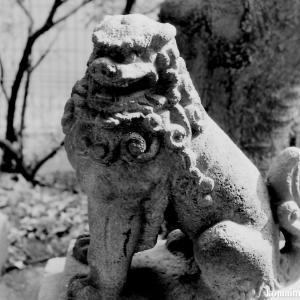 狛犬たちのモノローグ  File844  新小岩天祖神社  其の弐