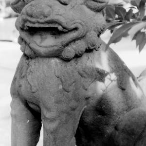 狛犬たちのモノローグ  File909  素盞嗚尊神社