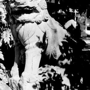 狛犬たちのモノローグ  File913  止止呂支比売命神社