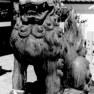 狛犬たちのモノローグ  File916  高崎神社  其の弐